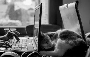 teletrabajo ordenador y gato