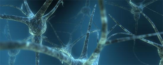 Neuronas duales