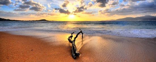 Madera en la playa